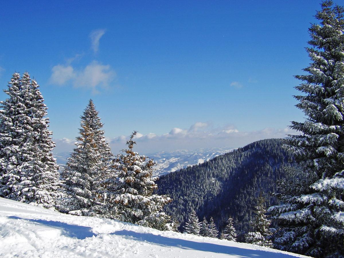 Kopaonik winter panorama