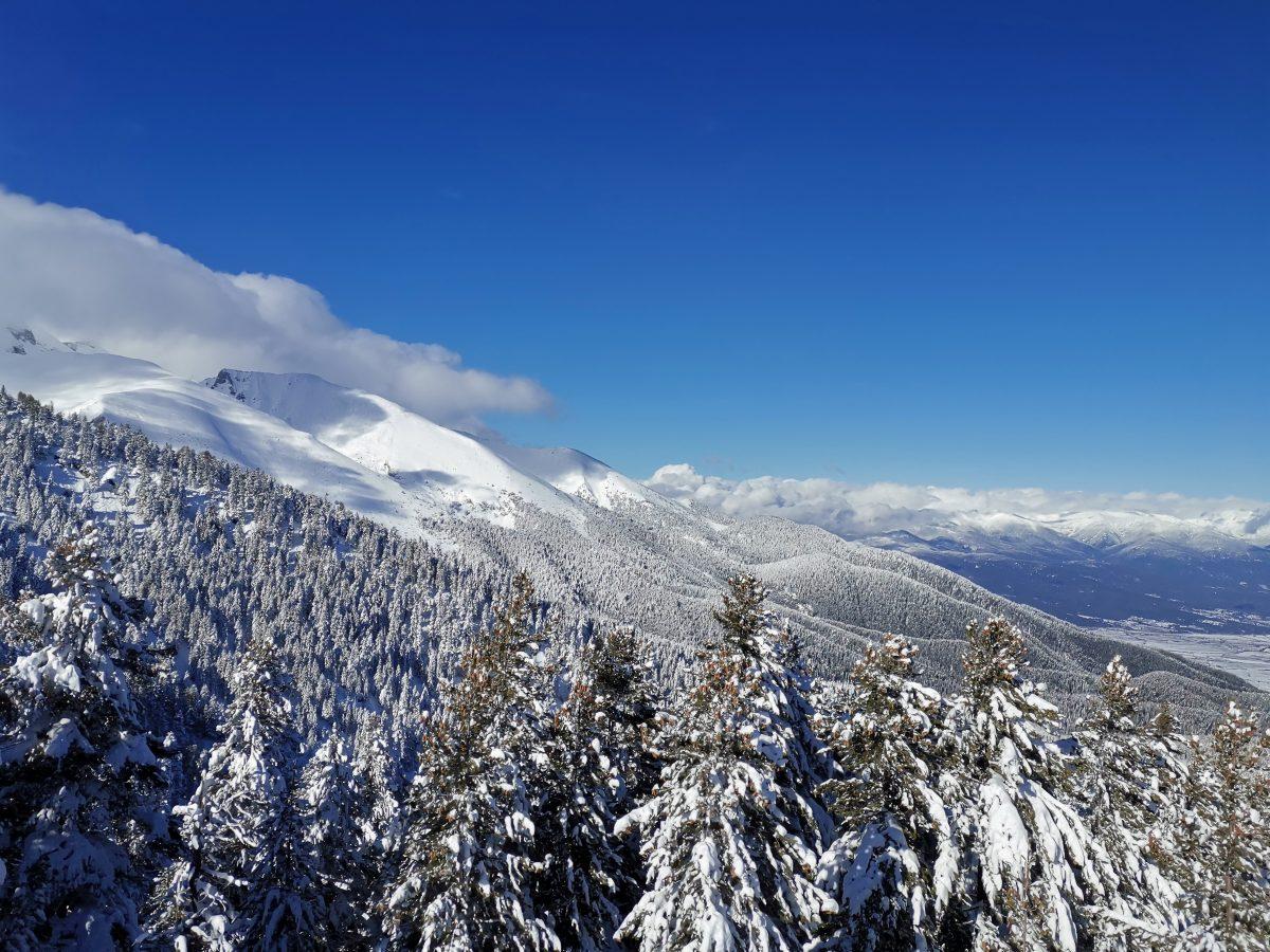 Bansko Panorama, mountains and pine woods